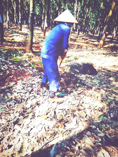 My mother in hard working Peole And Places Mother Working Vietnam Rubber Plantation Poor