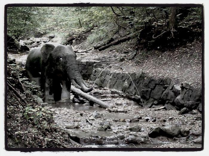hannibal's leftover? Elephant Zürich Walking Around