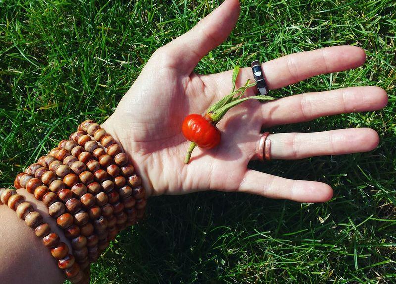 Showcase July Summer Red Farmers Market Fresh Plucked Fruit