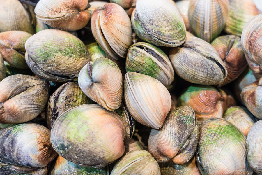 Fresh mussels on a market. Animal Shell Backgrounds Close-up Day Food Food And Drink Freshness Full Frame Gastropod Healthy Eating Large Group Of Objects Mussels No People Outdoors Seafood Seashell Shell