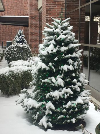 Christmas lights snowy tree snowy trees snowy Christmas Winter snow cold temperature christmas tree Building Exterior Christmas Lights Snowy Tree Snowy Trees Snowy Christmas Winter Snow Cold Temperature Celebration Holiday - Event No People Christmas Decoration Tradition Building Exterior Outdoors Day Tree Architecture