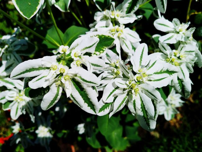 Flower Head Flower Leaf Petal Close-up Plant Flowering Plant In Bloom Pollen Plant Life Botany Botanical Garden
