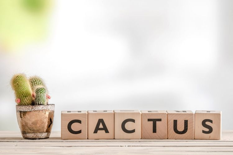 Cactus in a flowerpot with a sign next to it on the table Cactus Text Communication Western Script Capital Letter Wood - Material No People Indoors  Focus On Foreground Plant Single Word Nature Still Life Potted Plant Studio Shot Information Number Table Wall - Building Feature Message Sign