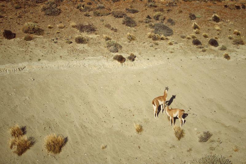 High angle view of deer on sand