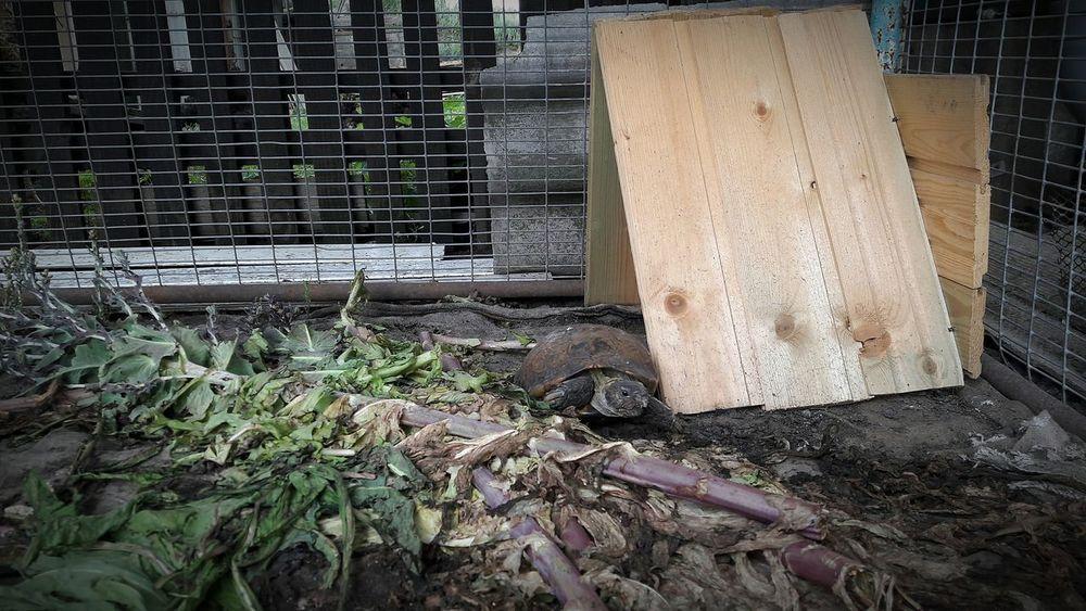 лето 2016 черепаха черепашка тарла