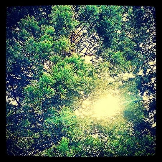 Morningwalk Nature