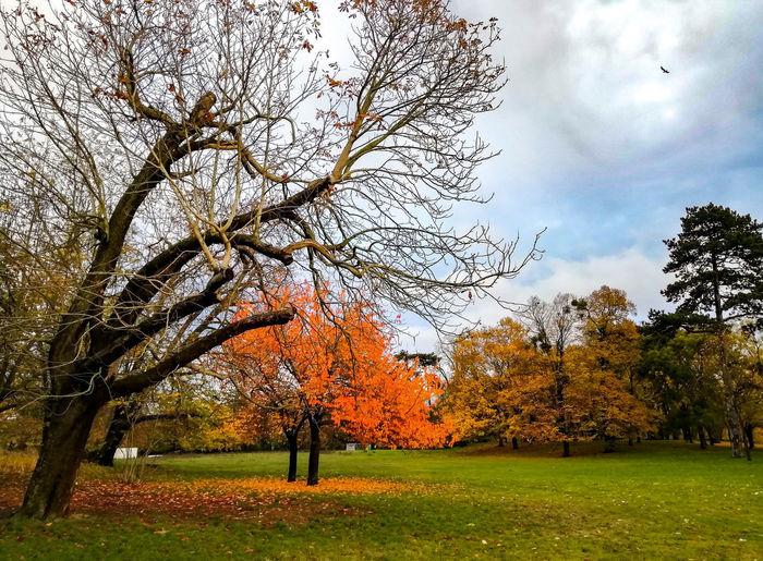 Tree Bird Sky