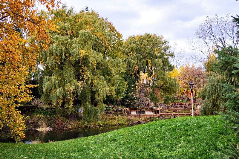Tree Plant Autumn Nature Grass Sky Green Color Growth Beauty In Nature Water Change Day Cloud - Sky No People Tranquility Park Architecture Tranquil Scene Park - Man Made Space Outdoors Fall