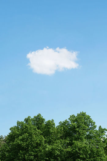 Cloud Copy Space Background Beauty In Nature Blue Cloud - Sky Day Fluffy Nature No People Outdoors Single Cloud Sky Tranquility Tree Treetop Vertical