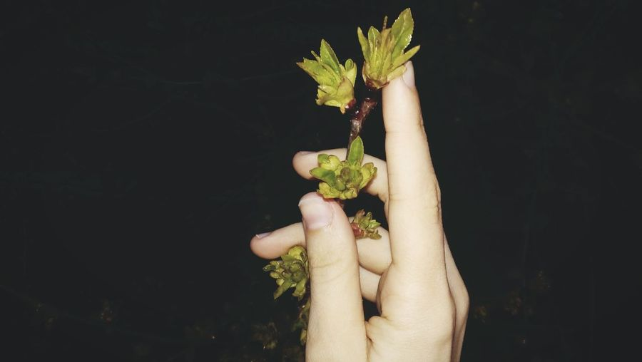 Human Hand Simplicity People Beauty In Nature Nature Beautiful World Besutiful Nature Beauty In Nature Nature Trees Spring