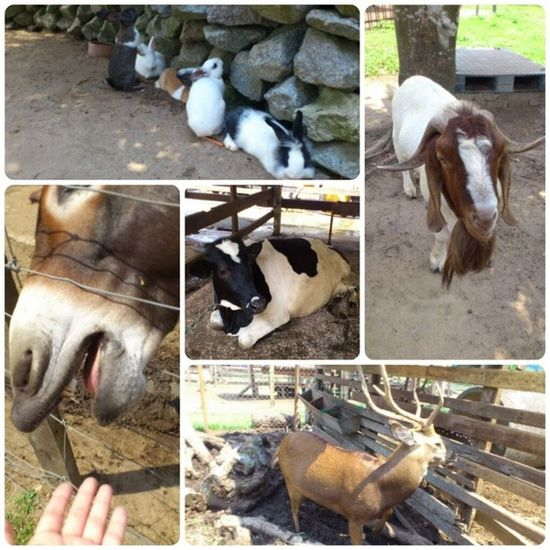 Adorable~ Animal Farm Broga Family lastweekendcutefunny