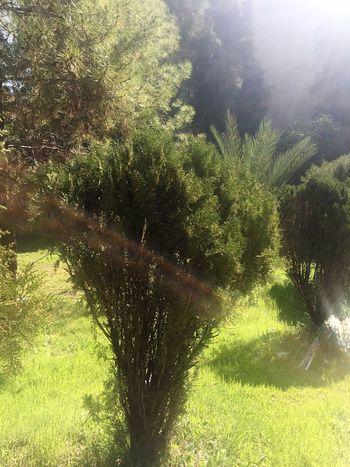 EyeEmNewHere Beautiful Nature Magic Tree Flowers
