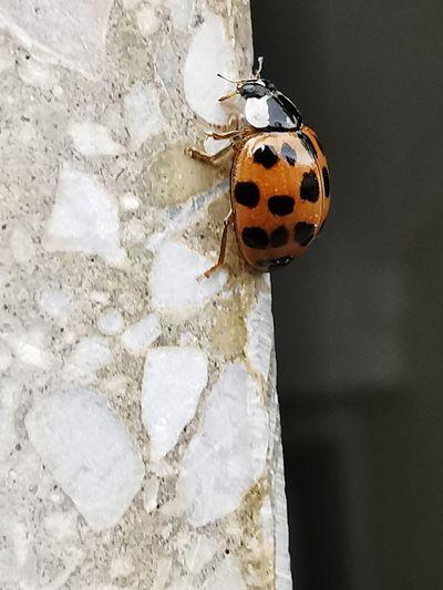 Close-up of ladybug on wall