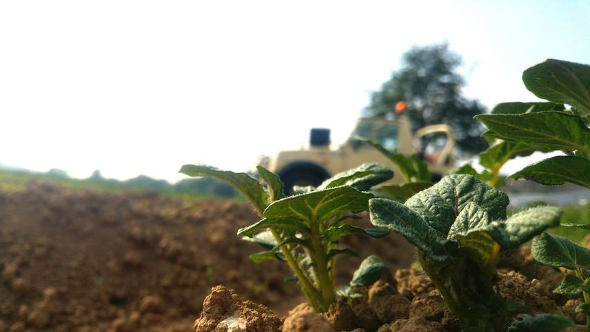 Dorfleben Kartoffelfreunde Suzukisamurai4x4 Dorfkind Freden Kennendieinderstadtgarnicht Kartoffeln Freisein