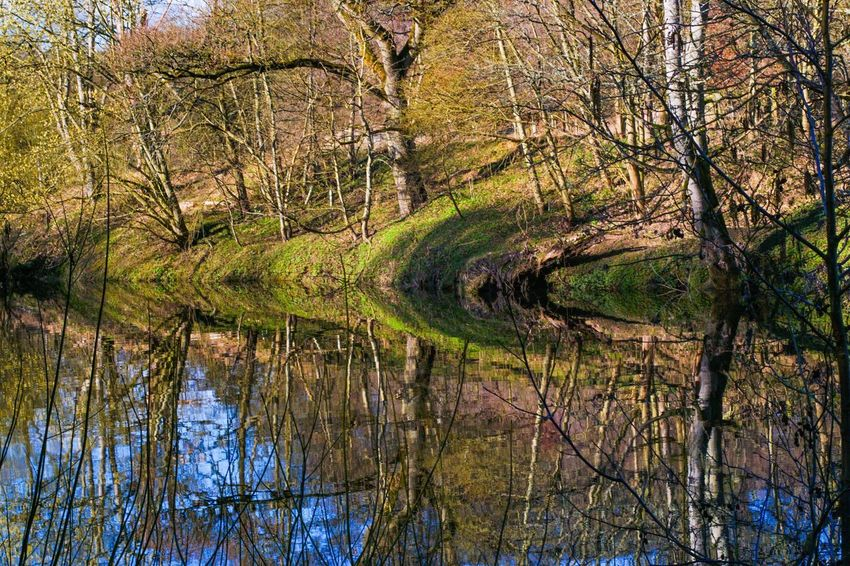 Perspectives On Nature Reflection Tree Nature Tranquil Scene Bare Tree Forest Tranquility Outdoors Water No People Beauty In Nature Scenics Waterfront Day Branch Lake
