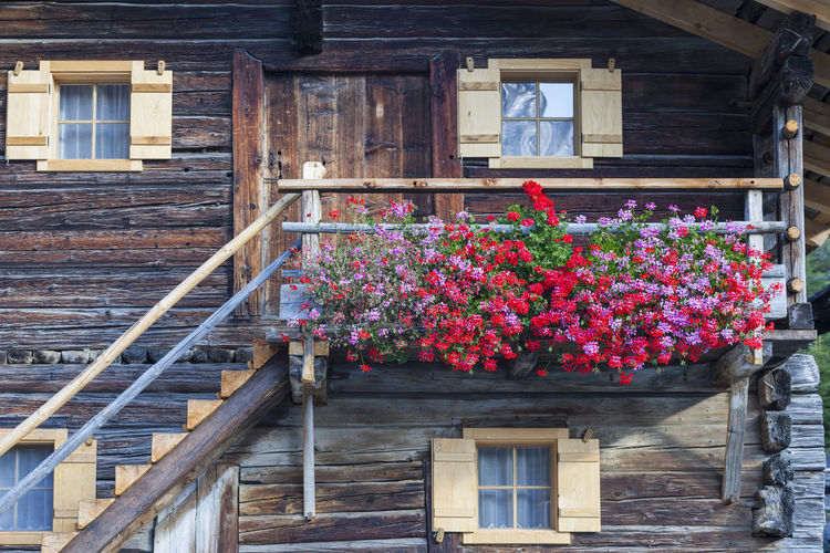 Low angle view of flowering plants by building