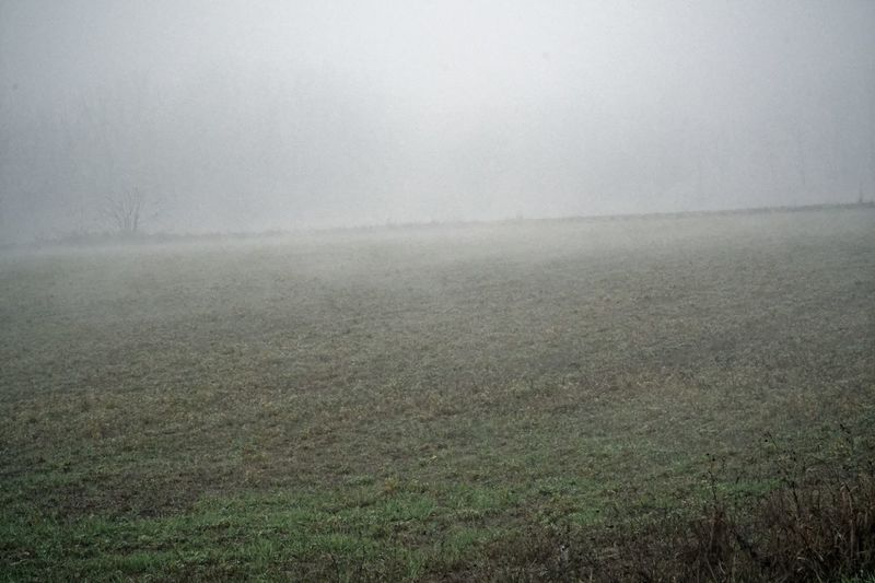 Foggy Weather Misty Beauty In Nature Day Field Fog Foggy Foggy Day Foggy Landscape Foggy Morning Grass Hazy  Landscape Mist Mistery Mistic Misty Morning Nature No People Outdoors Scenics Sky Tranquil Scene Tranquility Weather