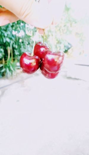 Sony Xperia Xa2 🍒cherries Cherries Red Fruit Close-up Food And Drink Cherry Raw Food Juicy Farmer Market Organic