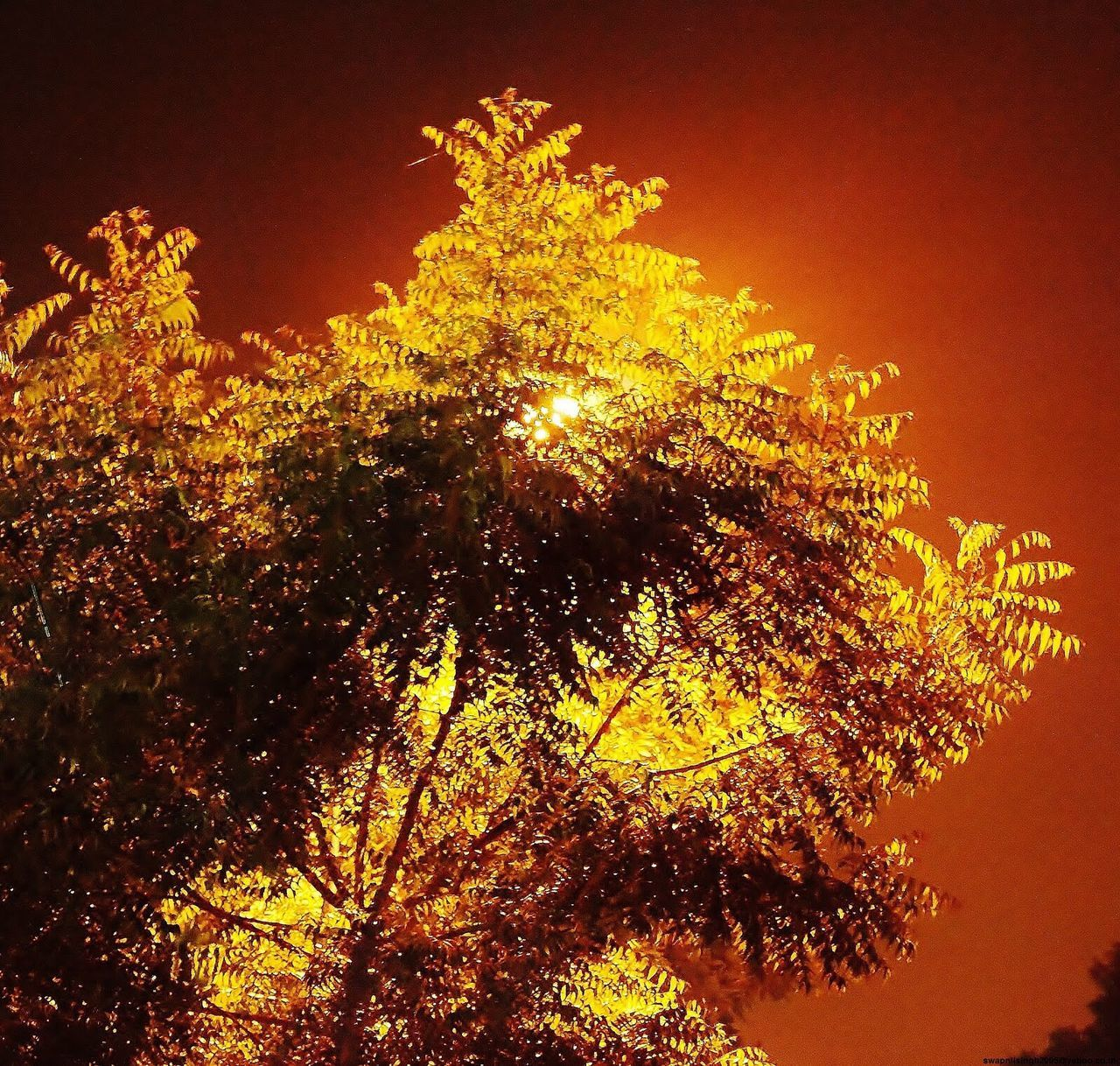 tree, low angle view, growth, nature, night, no people, sky, clear sky, beauty in nature, outdoors
