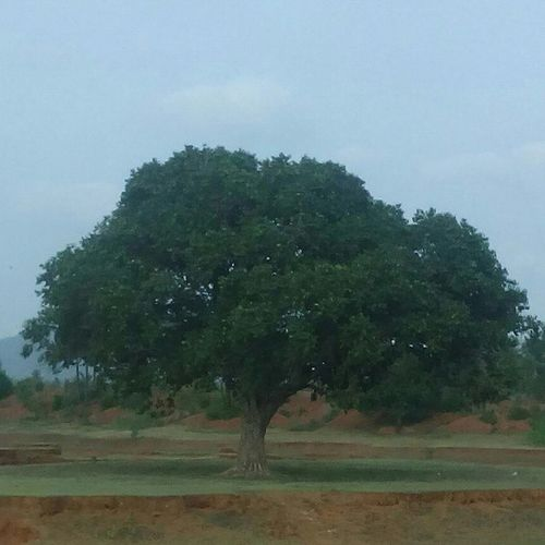 All alone.... This is the pic which i took on Saturday . i was vid my family in tour ... 😁 annavaram.... Holy place.. On the way to thalapulama temple.. It was marlapadu village... It was a wonderful experience. Njoyed alot Whpholdstill Tree Allalone Green Annavaram Onthego Ontheway Andhrapradesh Village Marlapadu Marlapaduvillage Picture Photography Micromaxunite2 Tour Traveller Lovelyview Thalapulamatemple Goddess Temple Holyplace Mango Landscapes With WhiteWall Rawmango Followers likemypicsmyinterestmyhobbiegoldenhourfotogeek15 visualcreators