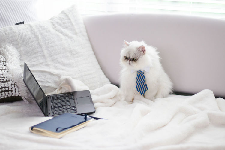 White cat resting on bed at home