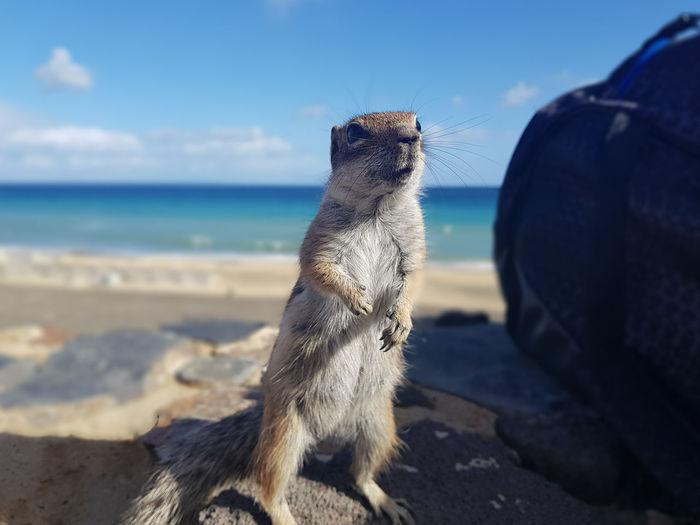 Fuerteventura SPAIN Siland Island Life Epic Cloud - Sky Sky Animal Themes Feeding  Squirrel Cute Cute Pets Ocean Water Shore Coast