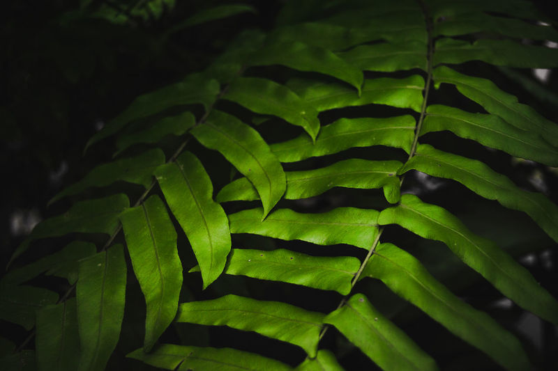 First Eyeem Photo Backgrounds Beauty In Nature Close-up Day Focus On Foreground Full Frame Green Green Color Growth High Angle View Leaf Leaves Nature No People Outdoors Pattern Plant Plant Part Selective Focus Tranquility