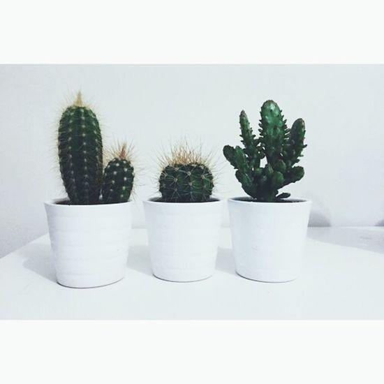 Plants Vegetation Plants Cactus Mine Loving