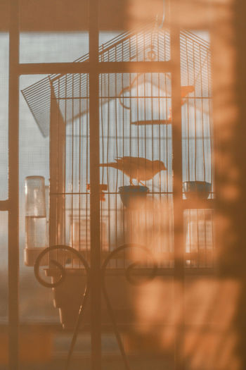 Silhouette of a canary in a cage during sunset