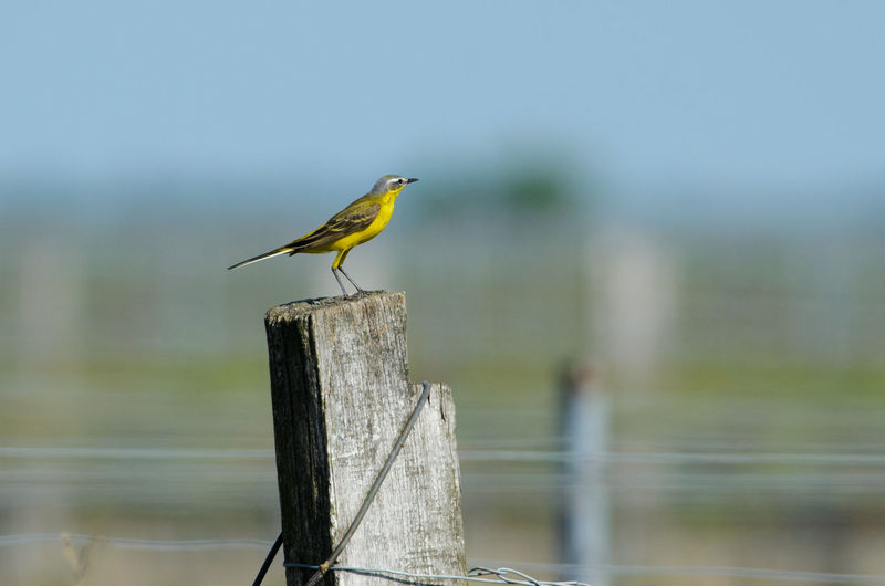 Bird Perching On Wooden Post By Lake