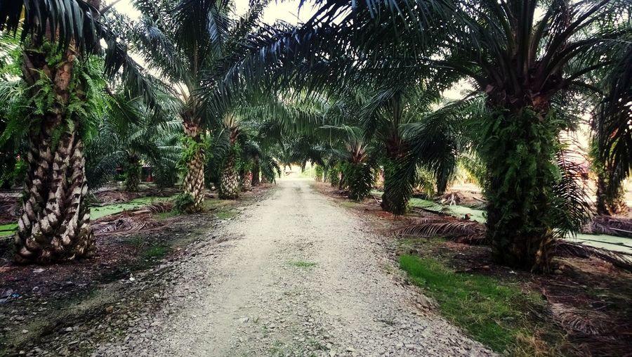 Tree Palm Trees