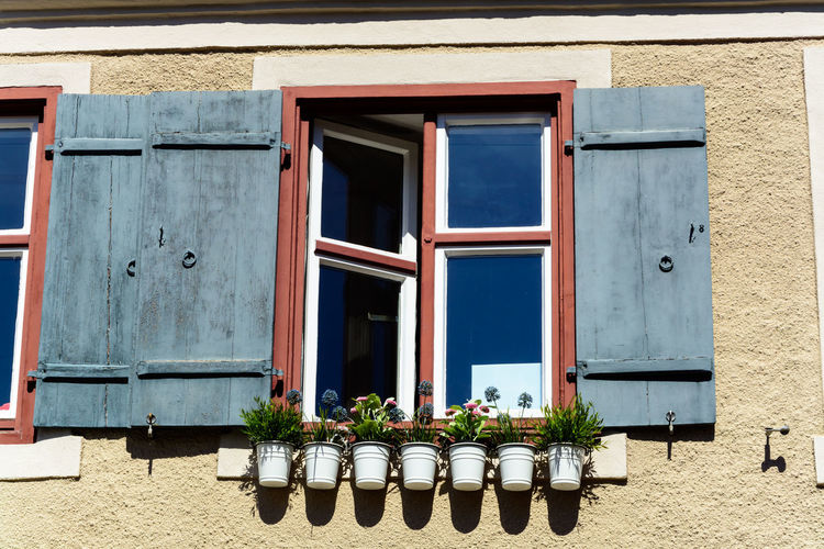 Potted plants on window of building
