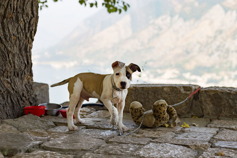 View of dogs on rock against sky