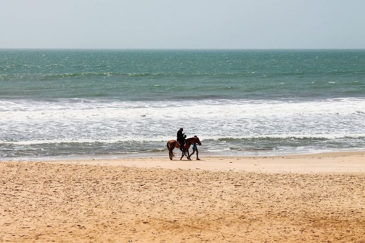 Beach Sea Sand Horizon Over Water Togetherness Dog Vacations Nature People Leisure Activity Lifestyles Adult Water Men Bonding Healthy Lifestyle Exercising Pets Two People Day Gambia, Africa Horse Photography