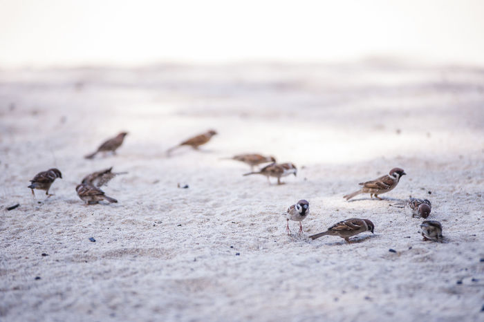 Animals Beach Beauty In Nature Birds_collection Close-up Day Nature Outdoors Perching Birds Sand Selective Focus Wildlife