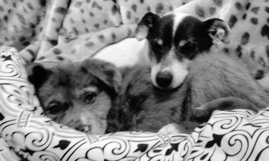 Dog❤ Mylovelydog Its A Dogs Life Happiness Bonding Moments Puppy❤ Rescuedog Close-up No People Indoors  Dogsofeyeem Dogs Life ItsADoggieDogWorld
