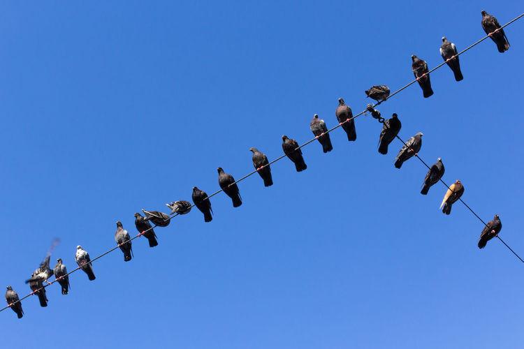 Abundance Bird