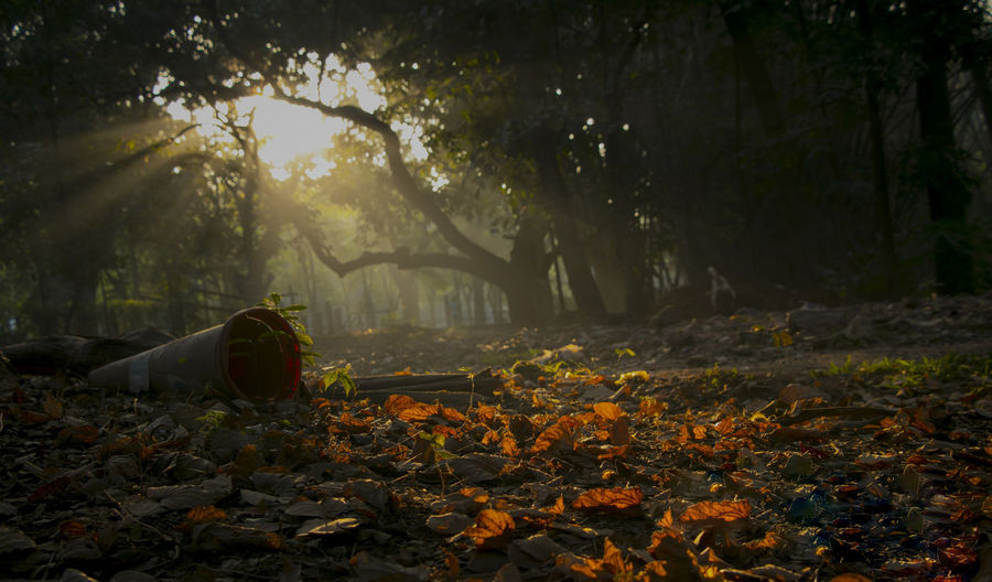 Sunrays slicing the darkness enticing hope Beautiful Orange Sunrays Autumn Beauty In Nature Day Falling Field Growth Land Leaf Leaves Nature No People Orange Color Outdoors Photography Sunrise Surface Level Tranquility Tree