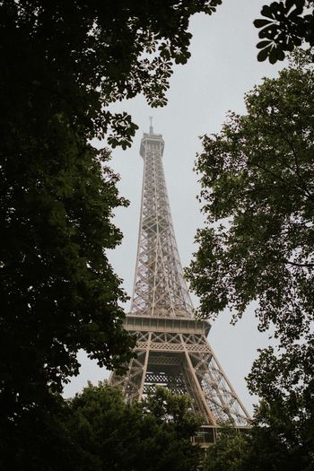 www.instagram.com/felixrussellsaw www.frsphoto.co Trees Nature Natural France Paris Eiffel Tower Tree Tall - High Plant Low Angle View Architecture Built Structure Tower