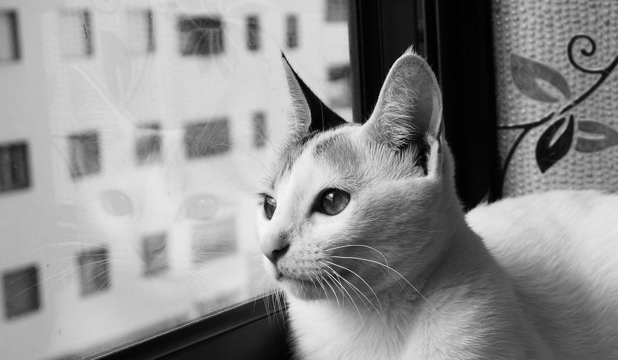 Close-up of cat by glass window