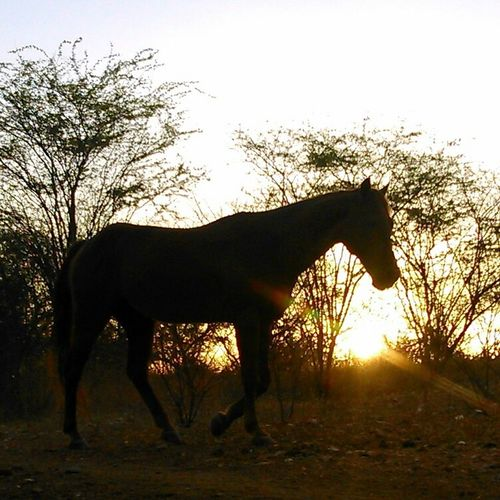 Silhueta Silhuoette Horses Sertão EyeEm Best Shots - Nature EyeEm Best Shots Photooftheday EyeEm Gallery Crepusculo Atardecer