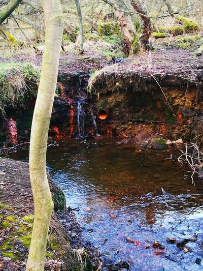Water Tree Nature No People Consett Castleside waterfall #water #landscape nature beautiful