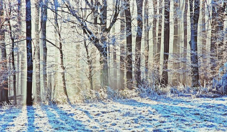 Ghost Sighting No People Winter Trees Winter Wonderland Sun Shining Cold Temperature
