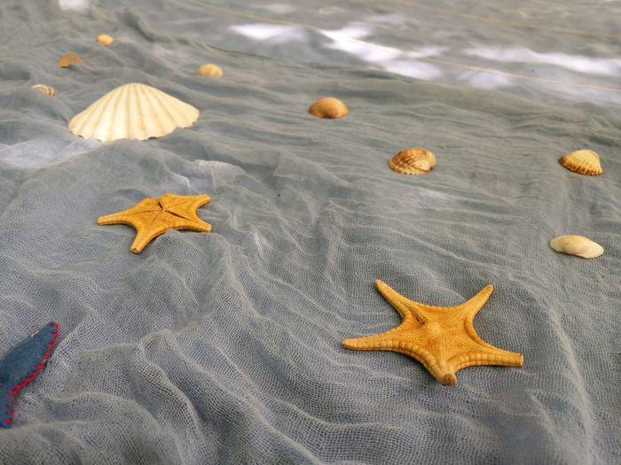 Kindergarten Summer Vacation Blue Sea Life Starfish  Star Shape Close-up Pastry Cutter