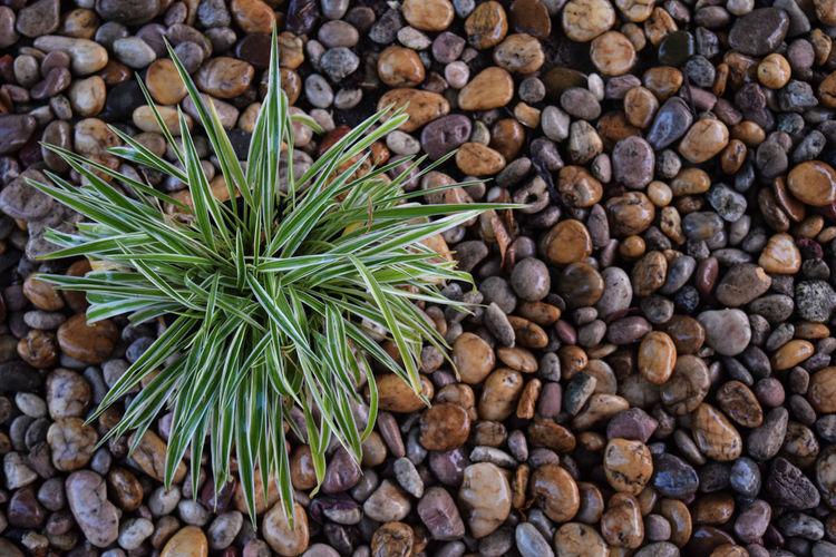 หินน้ำตกสีน้ำตาล Rock Falls Day High Angle View Nature No People Outdoors จัดสวน ต้นไม้สวย หินชายหาด หินน้ำตก หินสีน้