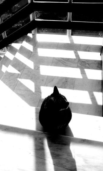 Enjoying the sun... Cat Lovers B&w Photography Animal Portrait