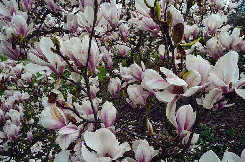 Spring Flowers Tree Park Nordpark Spring Springingermany Travel Traveltheworld Düsseldorf Dusseldorf_de Ddorfcity Ddorf NRW Nordrheinwestfallen Explorenewplaces City Explore Travelgram Instatravel