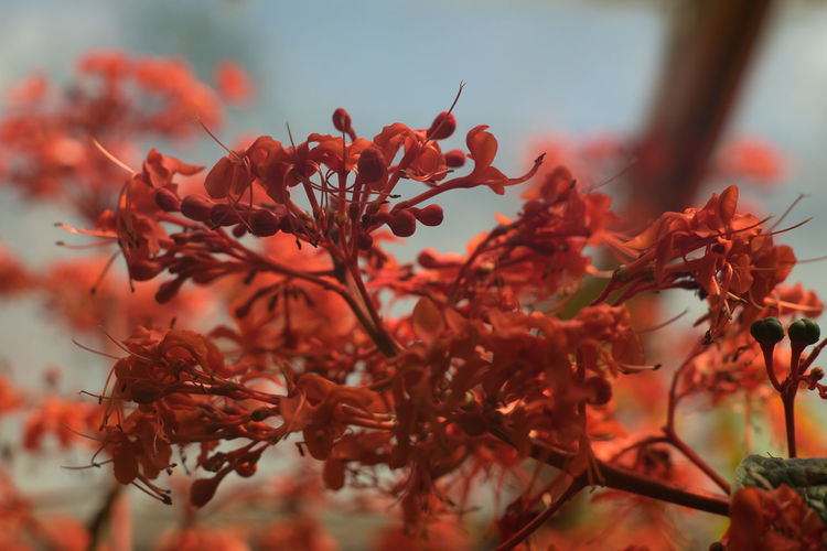 Beauty In Nature Blooming Botanical Garden Botanical Gardens Botany Branch Close-up Completely Red Completely Red Plant Flower Flower Head Fragility Freshness Growth Nature No People Outdoors Petal Plant Red Plant EyeEm Selects Perspectives On Nature