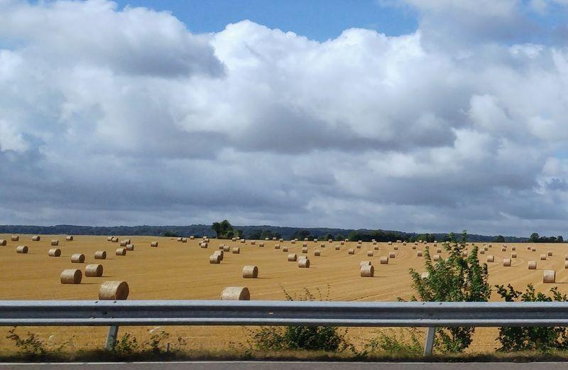 Oro, silenzio, cicale che cantano..musica d'estate Flamingo Desert Arid Climate Grazing Rural Scene Safari Animals Sunlight Sky Animal Themes Landscape Flock Of Sheep