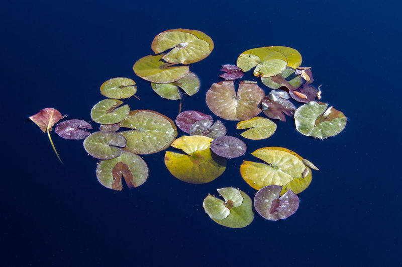 Close-up of fruits floating on water against black background